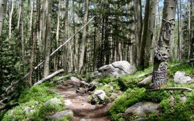 The Zen Forest